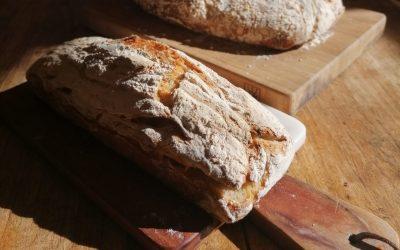 Ein Brot für freies Saatgut!